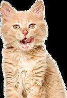 cat-01-mito-5051-001-imagilin-pa5051-pro