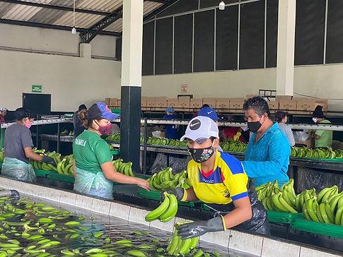 seleccion-piscina-banano