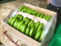 caja-banano-singlefinger
