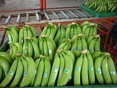 caja-banano-208