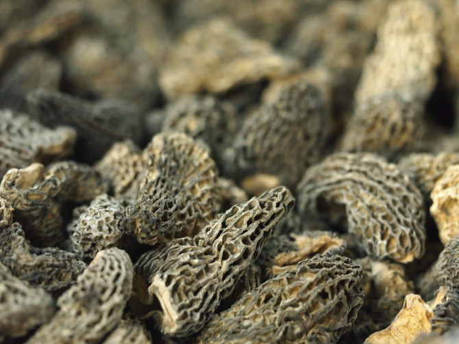 Magic ingredient for serious food lover: Premium Quality Morels.