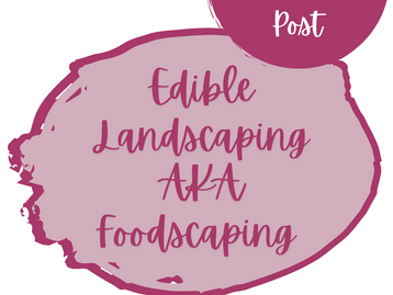 Edible Landscaping AKA Foodscaping