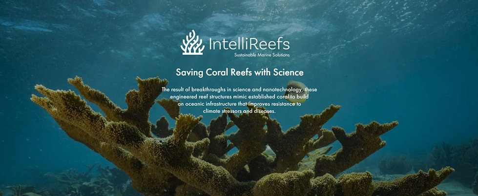 ReeflifeBanner2.jpg