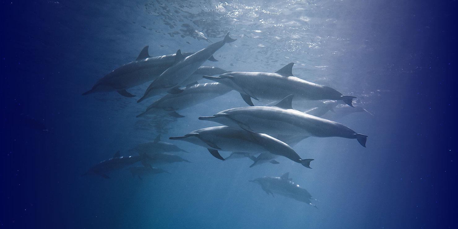 Dolphins_Websites.jpg