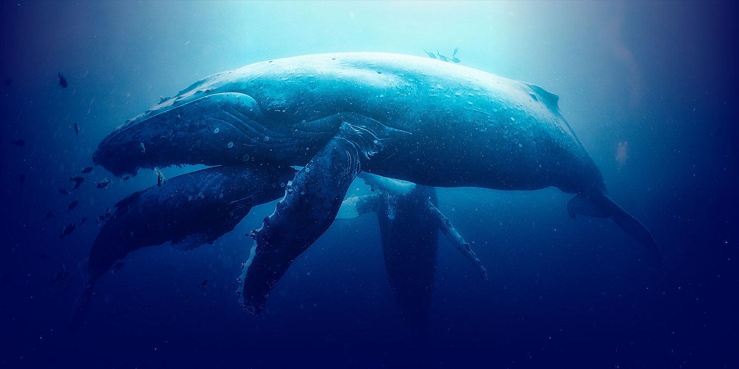 Whale_Websites.jpg
