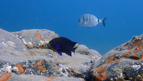 Lanzarote and its incredible life under water