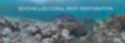 Seychelles_banner.png