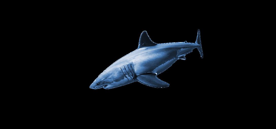 Shark (1).png
