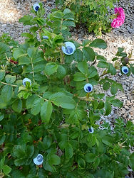 Googly eyes of various sizes nestle within the branches of a leafy green shrub