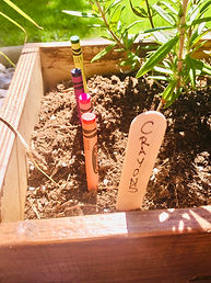 Multi-coloured crayons are lined up half-buried in a planter next to a leafy herb plant; a wooden stake labels the row as Crayons