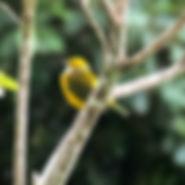 aves-18_edited.jpg