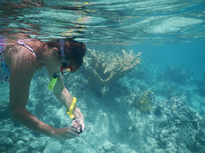 Snorkeling restauration corail.jpg
