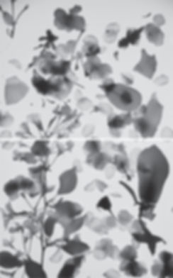 double collage blossom.jpg