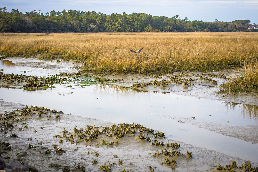 """Pluff mud found in the """"low country"""" of South Carolina."""