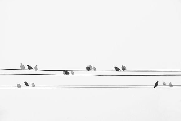 Pássaros-fios