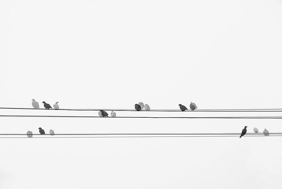 Pássaros_fios_-_3685x2467_-_Arte_digita
