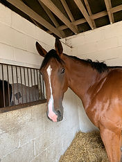 Unraced