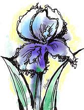 Botanical flower illustratin