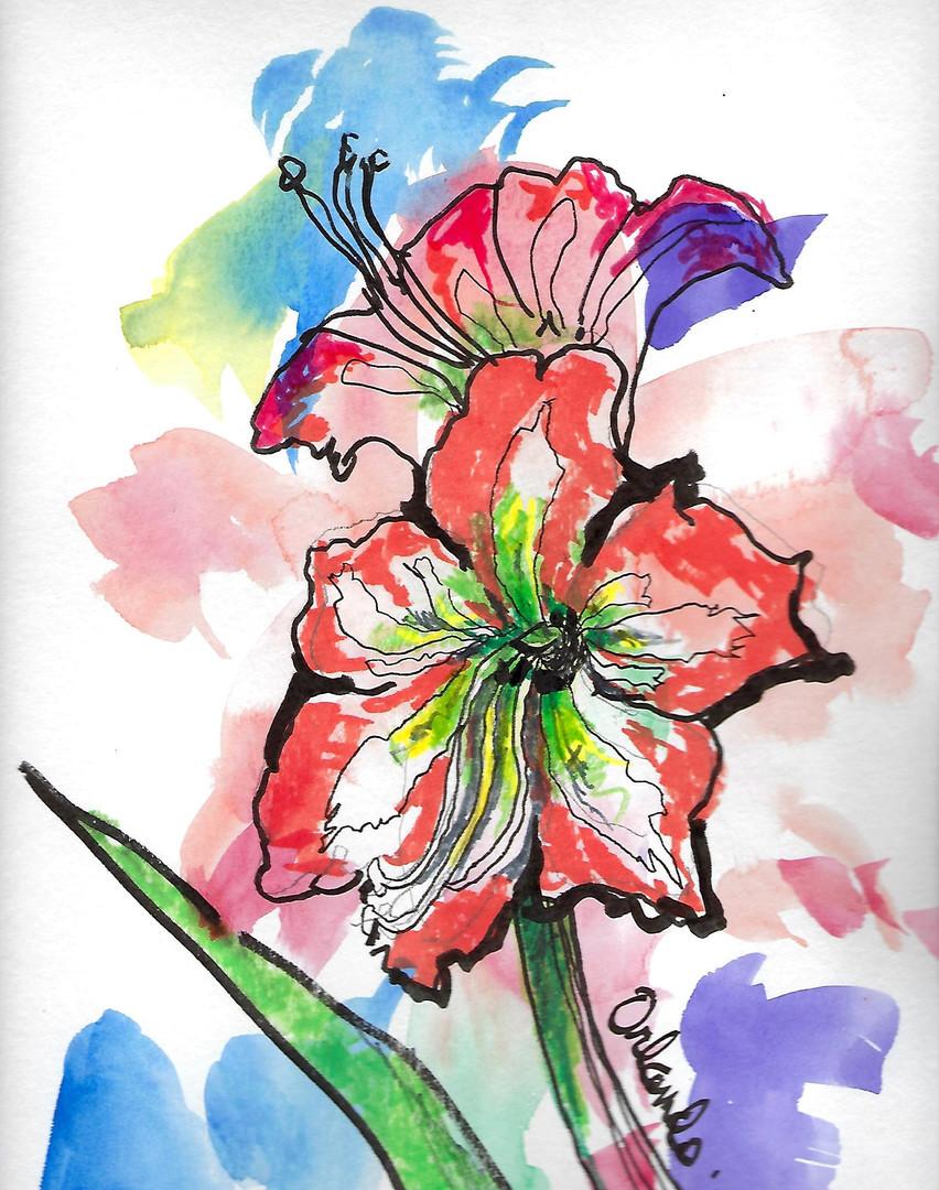 amaryllis sketch.jpg