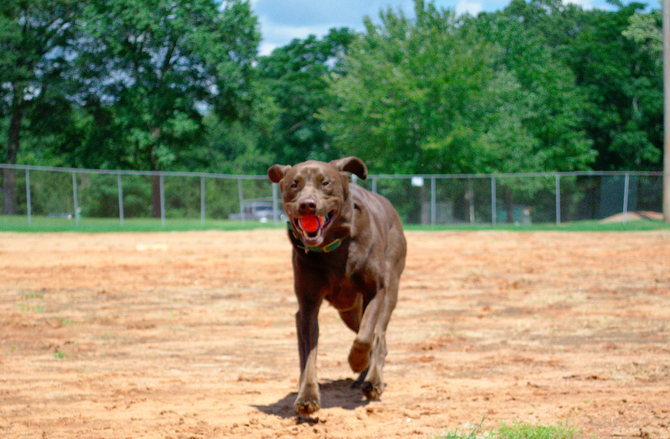 Play after learning improves training performance in dogs!