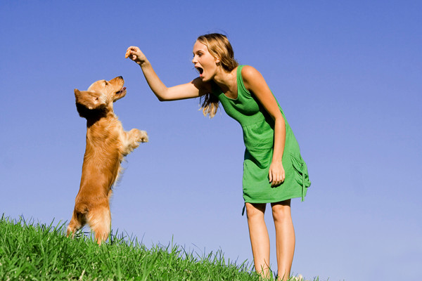 Study shows lower stress levels in dogs trained positively!