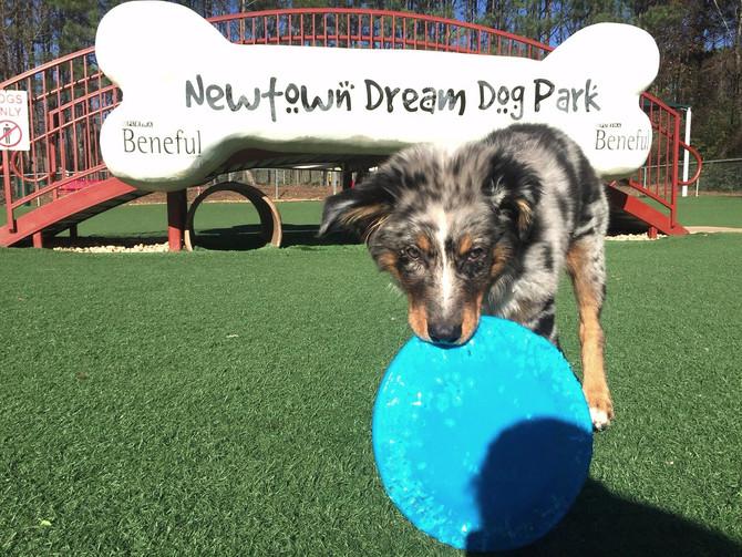 Top Five Dog Parks in Atlanta!
