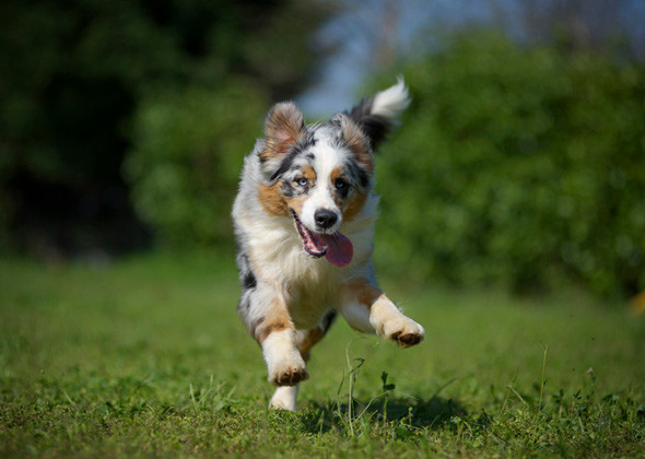How to Live with a High-Energy Dog