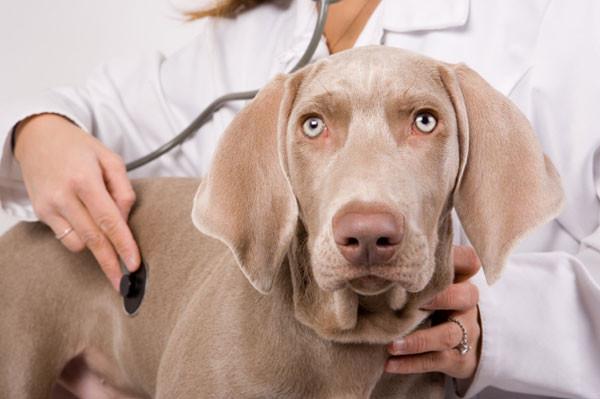 Fear-Free vet visits!