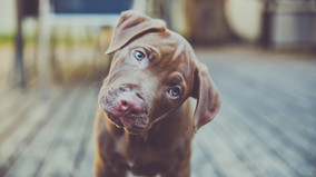 Does your dog understand what you say?