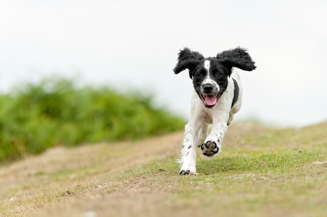 Off-leash Expert!
