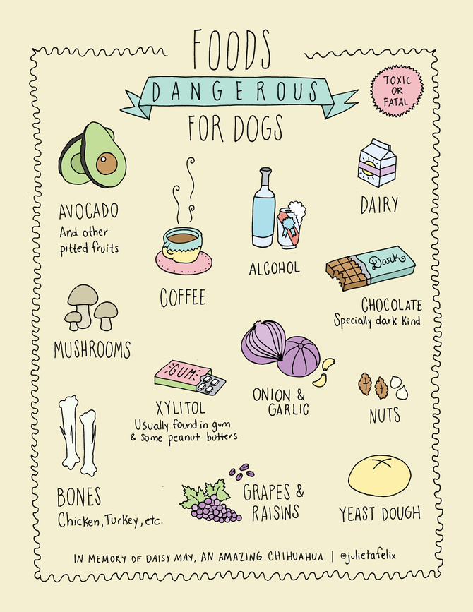 Which foods are dangerous for dogs?