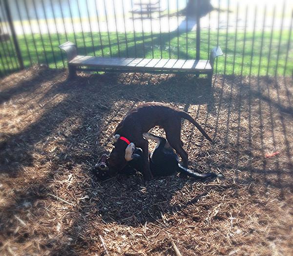 Atlanta Dog Trainer