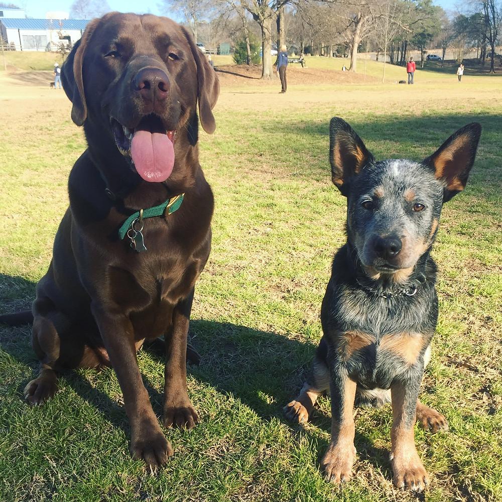 Brookhaven Dog Park