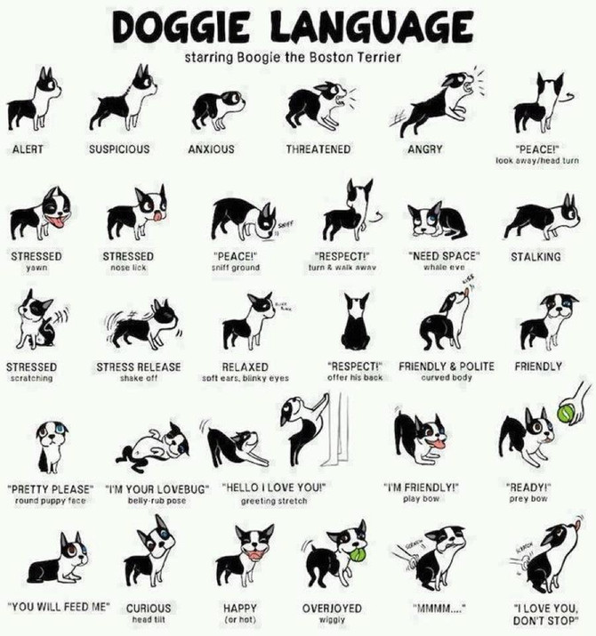How well can you read canine body language?
