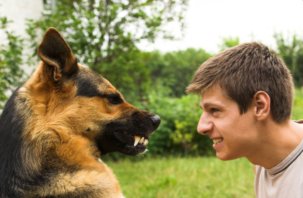 NEVER punish your dog for growling!