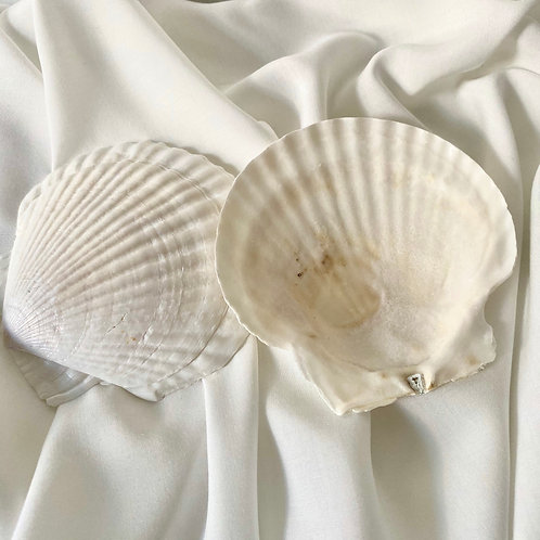 Natural shell // jewellery dish