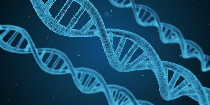 BIOETHIQUE ADN
