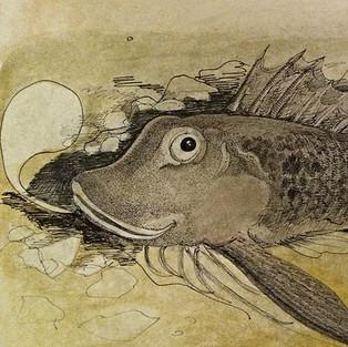 Sea Robin 11x14