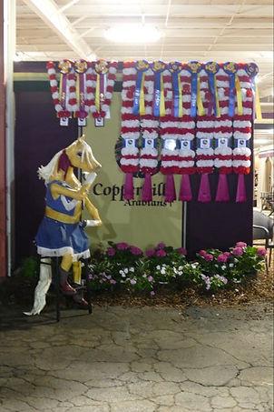 Barnadette admiring Championship ribbons