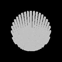 Seashell_edited.png