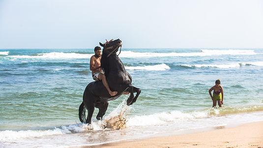 equestre maroc libre2.jpg