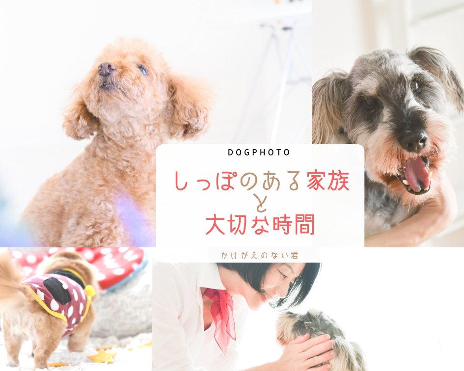 期間限定:DOG PHOTO/プライベートPHOTOROOM撮影