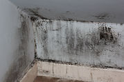 house-mould-94927.jpg