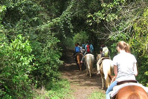 Horseback Riding Tour #2: Flowers Camp Cave