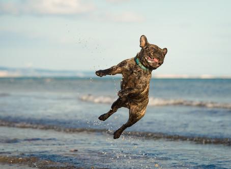 Using CBD Oil for Dogs Arthritis & Joint Pain
