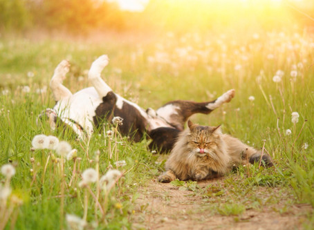 How CBD Can Support Your Pet's Immune System