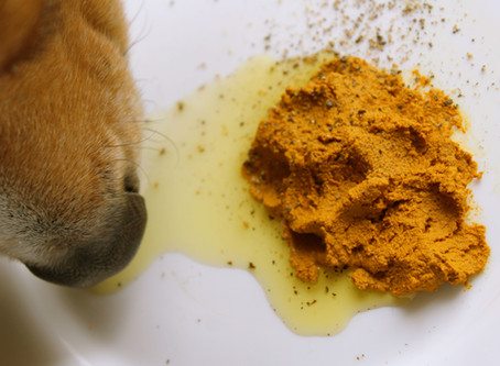 Spice up your pet's life with Turmeric