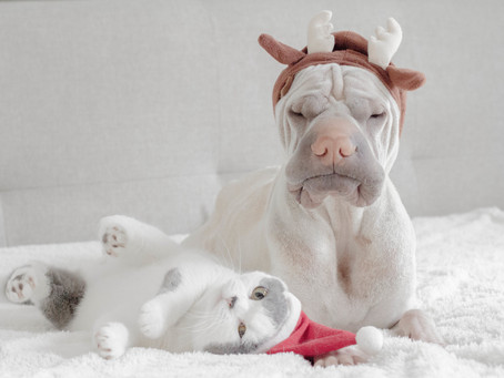 Tips to keep your pets safe over the festive season!