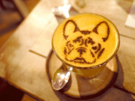 5 ways Turmeric can spice up your dog's health