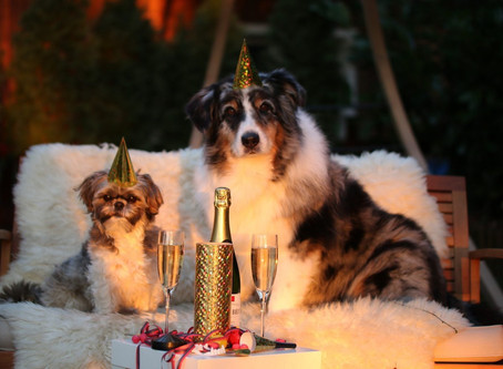 How to help your cats and dogs cope with New Year's Eve!